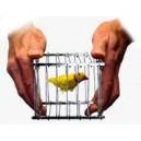 Cage à disparition