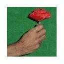 allumette en fleur